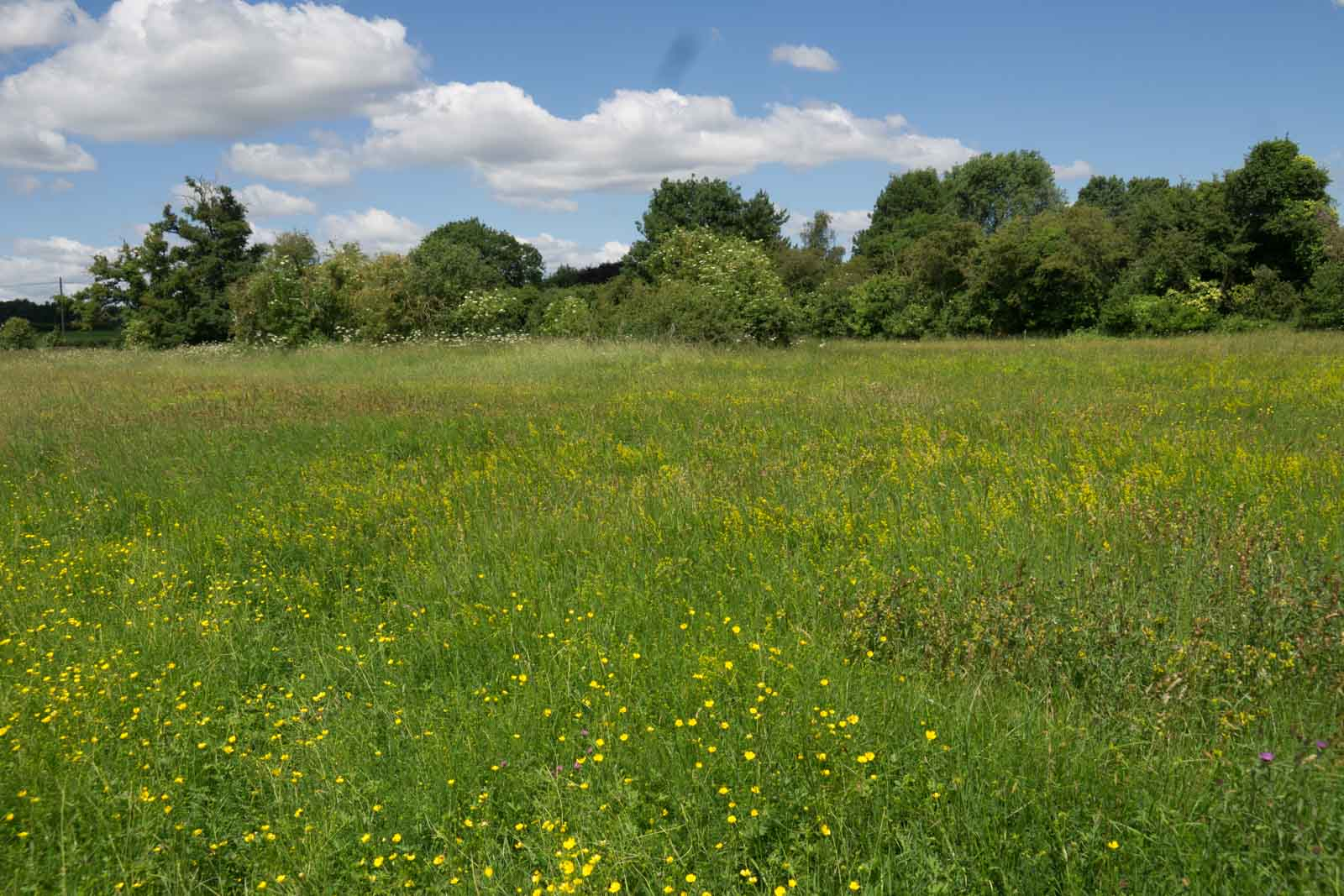Southorpe Meadow-08560