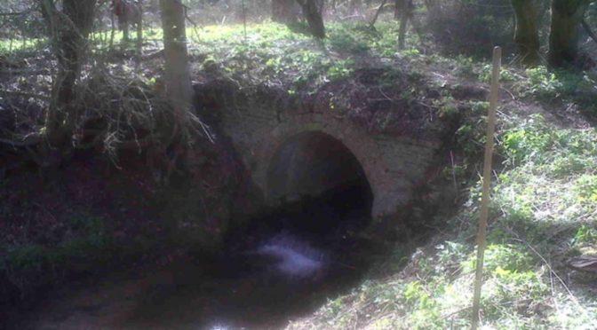 Visit to Bainton Heath