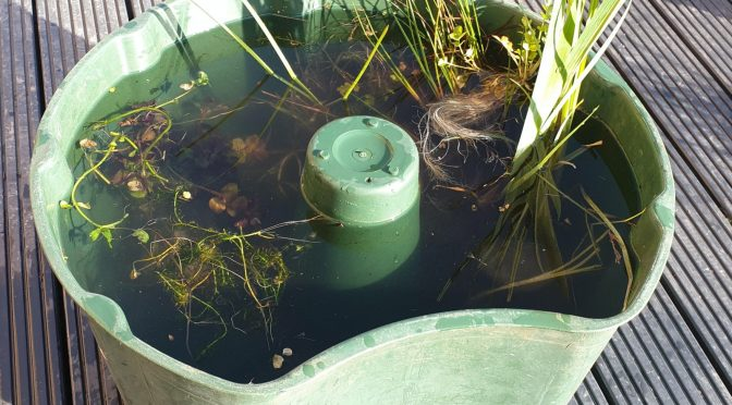 How to … build a DIY pond
