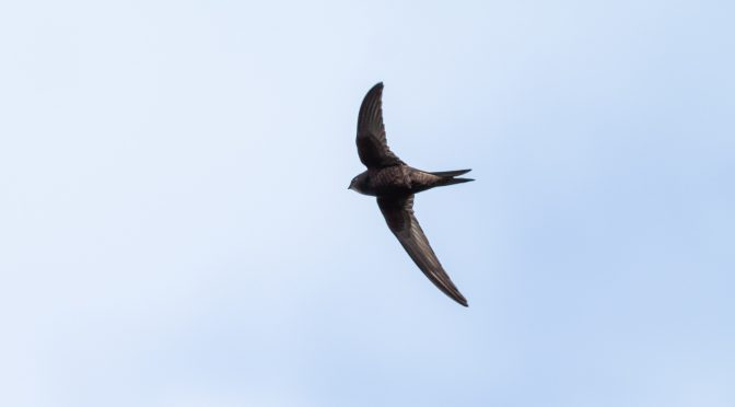 Join our survey of Swifts